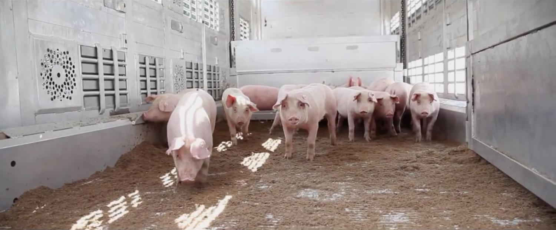 17-01-53_Schweine-LKW-unten